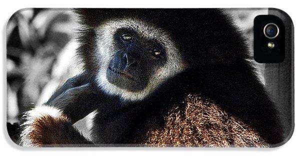 I Think I Could Like You IPhone 5s Case by Miroslava Jurcik
