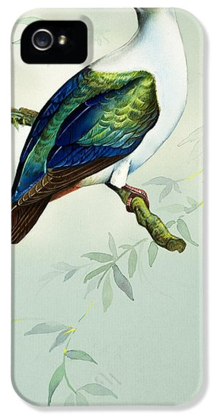Imperial Fruit Pigeon IPhone 5s Case by Bert Illoss