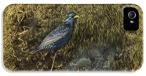 Starlings iPhone 5s Case - In Sanctuary by Susan Capuano