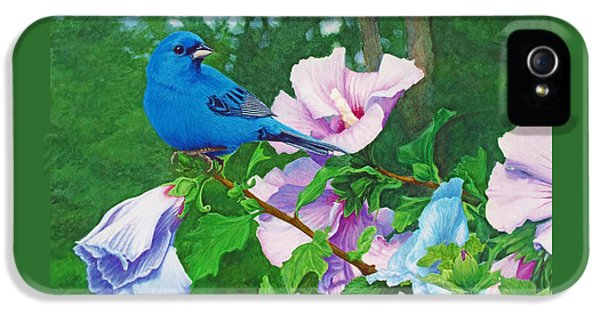 Indigo Bunting  IPhone 5s Case by Ken Everett