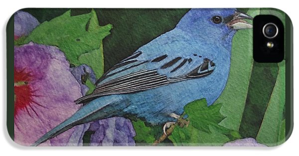 Indigo Bunting No 2 IPhone 5s Case by Ken Everett