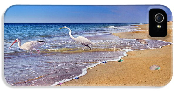 Ibis iPhone 5s Case - Inspiring Ibis Egret Sandpiper Starfish Sand Dollars  by Betsy Knapp