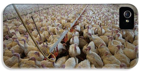 Intensive Turkey Farm IPhone 5s Case by Peter Menzel