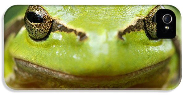 Amphibians iPhone 5s Case - It's Not Easy Being Green _ Tree Frog Portrait by Roeselien Raimond