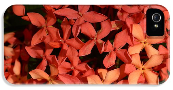 Decorative iPhone 5s Case - Ixora Red by Sanjay Ghorpade