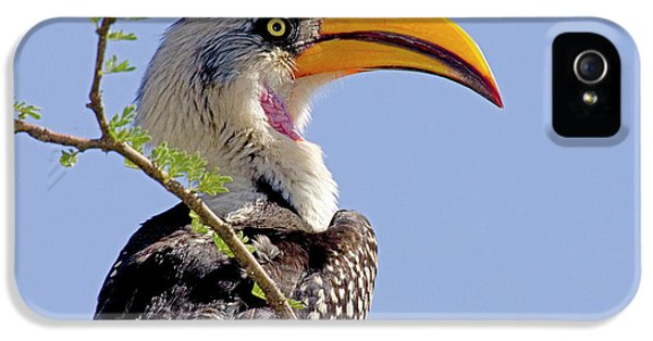 Hornbill iPhone 5s Case - Kenya Profile Of Yellow-billed Hornbill by Jaynes Gallery