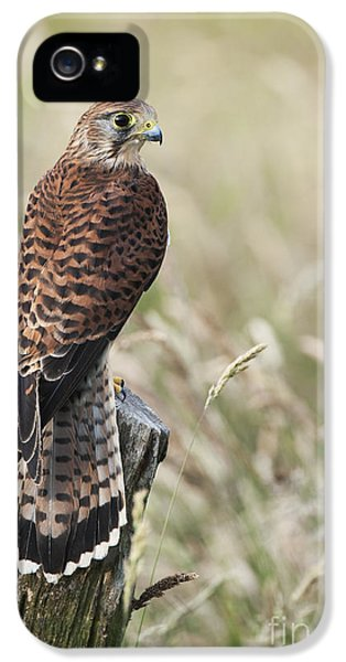 Kestrel IPhone 5s Case by Tim Gainey