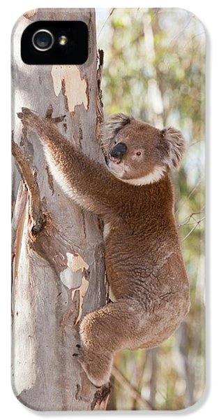 Koala Bear IPhone 5s Case