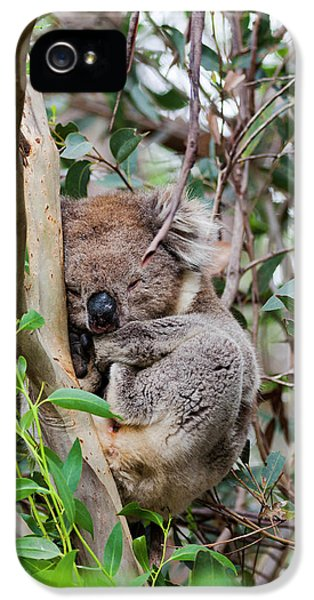 Koala (phascolarctos Cinereus IPhone 5s Case