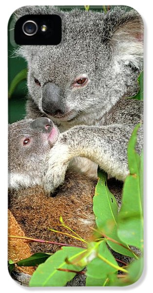 Koalas IPhone 5s Case
