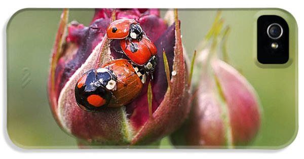 Ladybug Foursome IPhone 5s Case by Rona Black