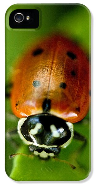 Ladybug On Green IPhone 5s Case by Iris Richardson