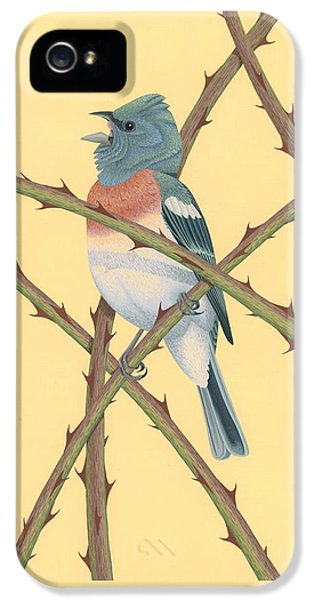 Lazuli Bunting IPhone 5s Case by Nathan Marcy