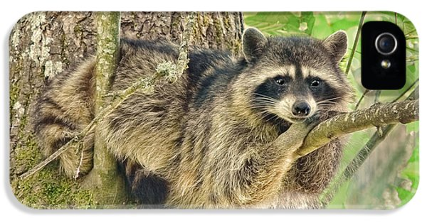 Lazy Day Raccoon IPhone 5s Case by Jennie Marie Schell