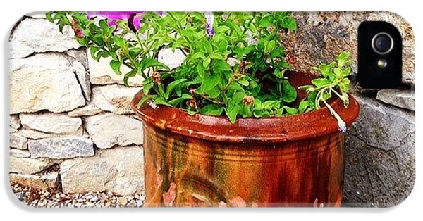 Decorative iPhone 5s Case - Anduze Flower Pot With Petunias by Cristina Stefan