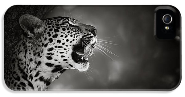 Cat iPhone 5s Case - Leopard Portrait by Johan Swanepoel