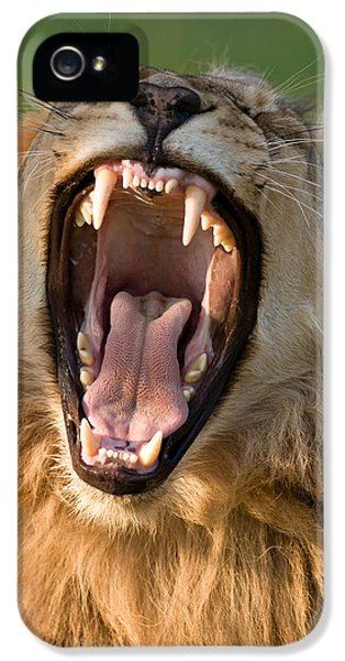 Lion IPhone 5s Case by Johan Swanepoel