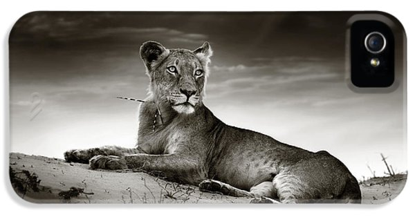 Cat iPhone 5s Case - Lioness On Desert Dune by Johan Swanepoel