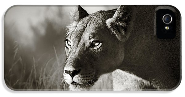 Cats iPhone 5s Case - Lioness Stalking by Johan Swanepoel