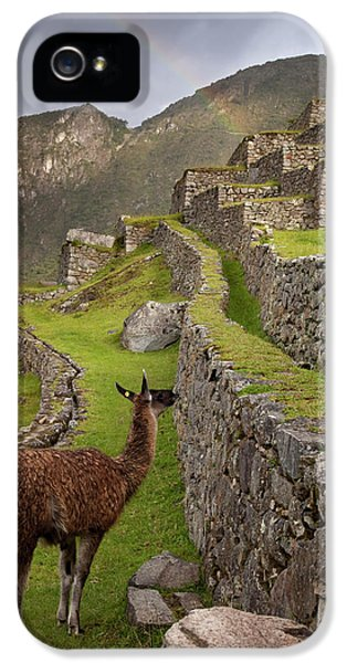 Llama Stands On Agricultural Terraces IPhone 5s Case by Jaynes Gallery
