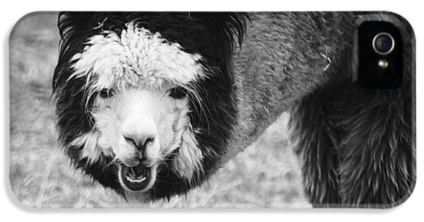 IPhone 5s Case featuring the photograph Llama by Yulia Kazansky