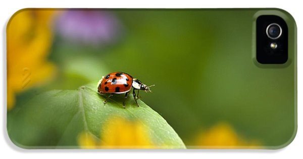 Lonely Ladybug IPhone 5s Case by Christina Rollo