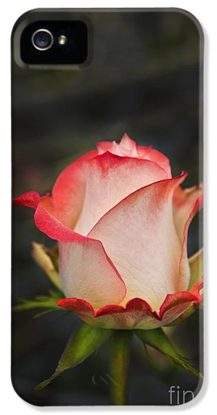 Love Is A Rose II IPhone 5s Case by Al Bourassa