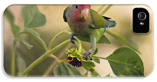 Lovebird On  Sunflower Branch  IPhone 5s Case