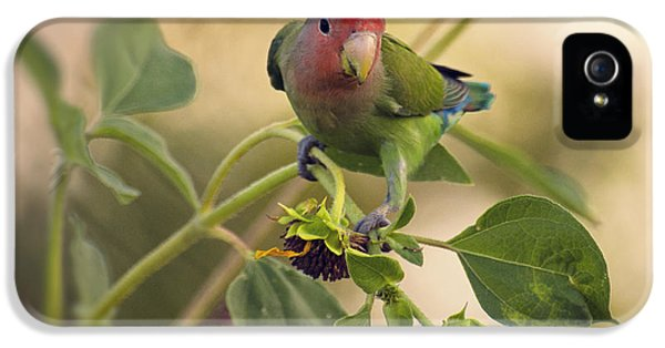 Lovebird On  Sunflower Branch  IPhone 5s Case by Saija  Lehtonen