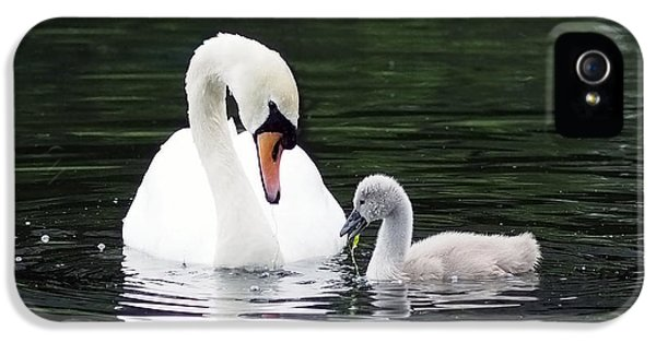 Lunchtime For Swan And Cygnet IPhone 5s Case by Rona Black
