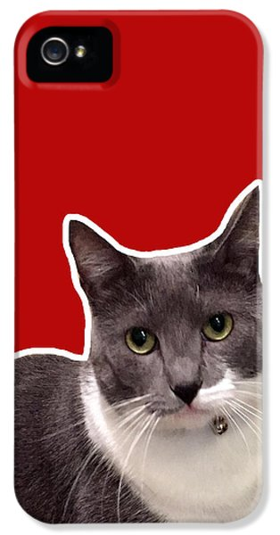 Cats iPhone 5s Case - Mac Attack-custom Order by Linda Woods
