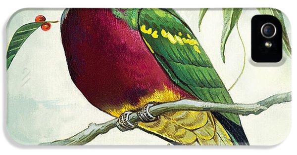 Magnificent Fruit Pigeon IPhone 5s Case
