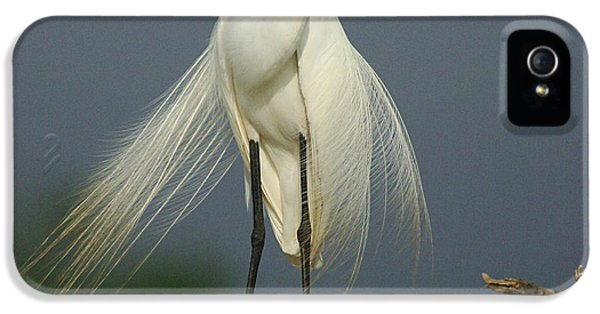Majestic Great Egret IPhone 5s Case by Bob Christopher