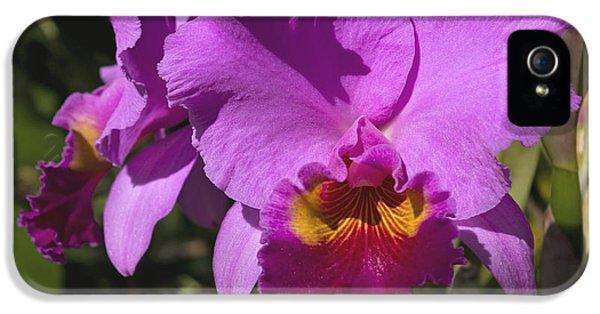 Far North Queensland iPhone 5s Case - Majestic Pink Cattleya Orchid Bloom by Kerryn Madsen-Pietsch