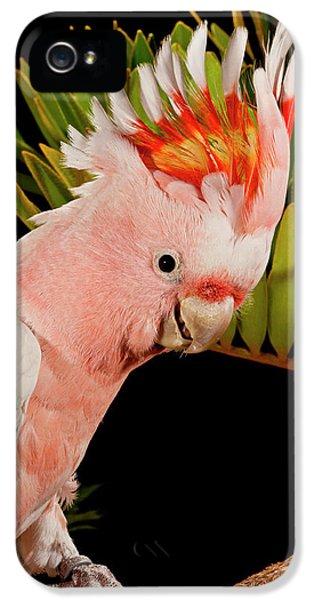 Cockatoo iPhone 5s Case - Major Mitchell's Cockatoo, Lophochroa by David Northcott
