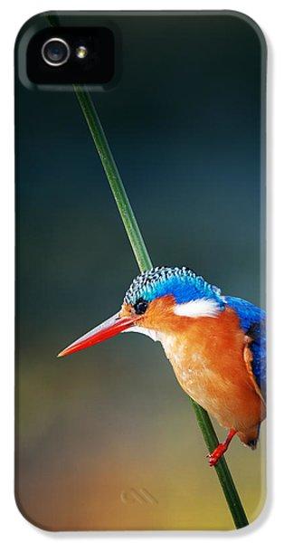 Kingfisher iPhone 5s Case - Malachite Kingfisher by Johan Swanepoel