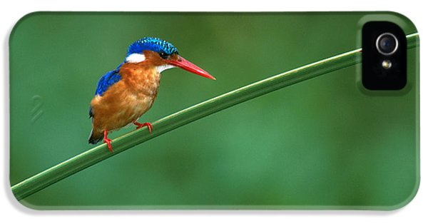 Malachite Kingfisher Tanzania Africa IPhone 5s Case by Panoramic Images