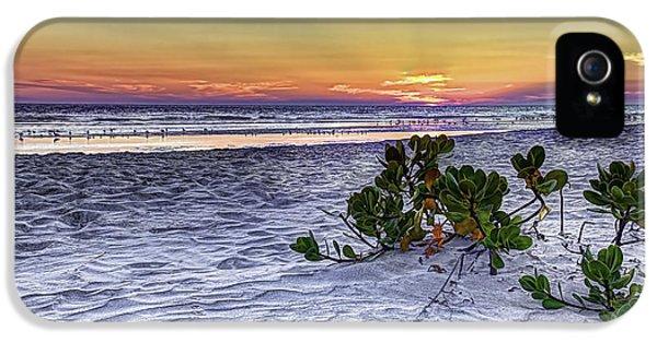 Mangrove On The Beach IPhone 5s Case