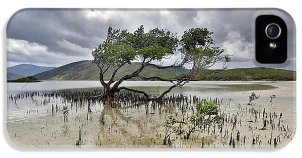 Far North Queensland iPhone 5s Case - Mangrove Tree by Peter Dore