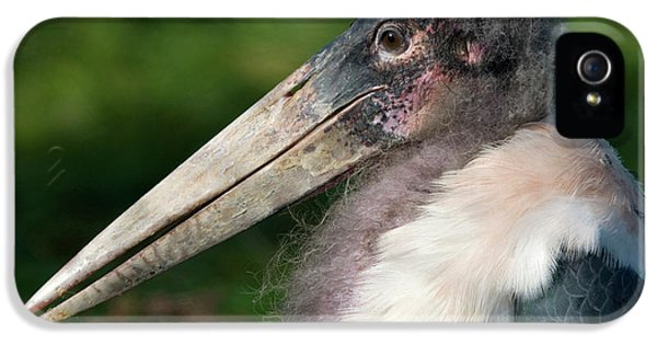 Marabou Stork IPhone 5s Case by Nigel Downer