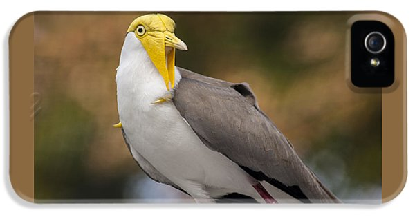 Masked Lapwing IPhone 5s Case by Carolyn Marshall