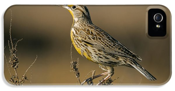 Meadowlark On Weed IPhone 5s Case by Robert Frederick