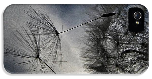 Sky iPhone 5s Case - #mgmarts #dandelion #makeawish #wish by Marianna Mills