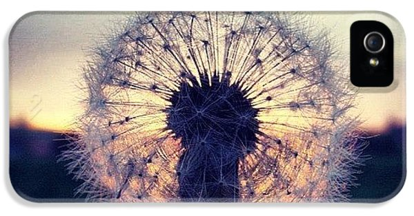 Sky iPhone 5s Case - #mgmarts #dandelion #sunset #simple by Marianna Mills