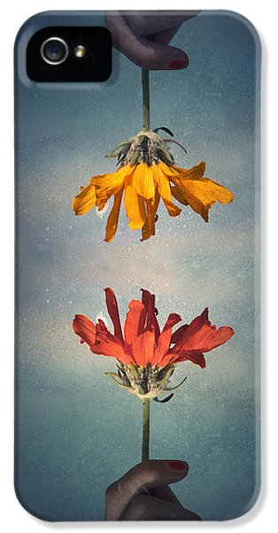 Daisy iPhone 5s Case - Middle Ground by Tara Turner