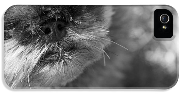 Griffon iPhone 5s Case - Moby by Matthew Blum