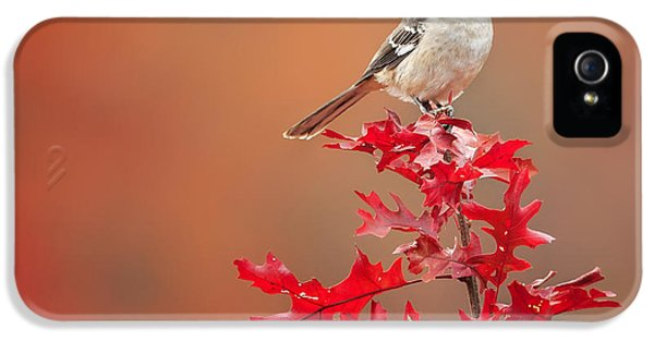 Mockingbird Autumn Square IPhone 5s Case