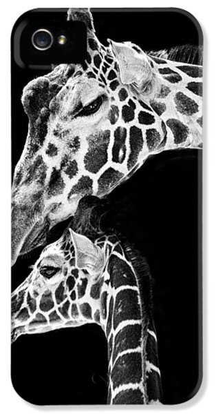 Mom And Baby Giraffe  IPhone 5s Case by Adam Romanowicz