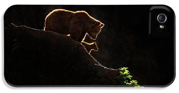 Mom Bear With Cub IPhone 5s Case
