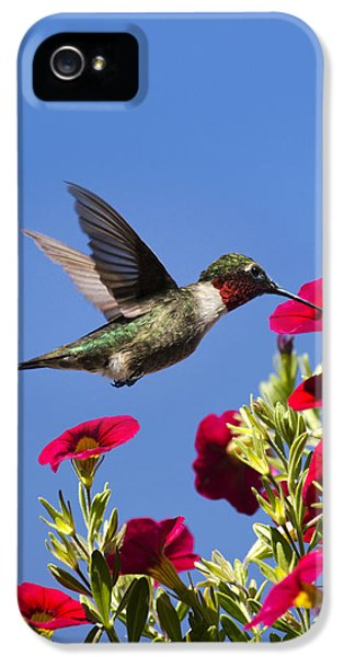 Humming Bird iPhone 5s Case - Moments Of Joy by Christina Rollo